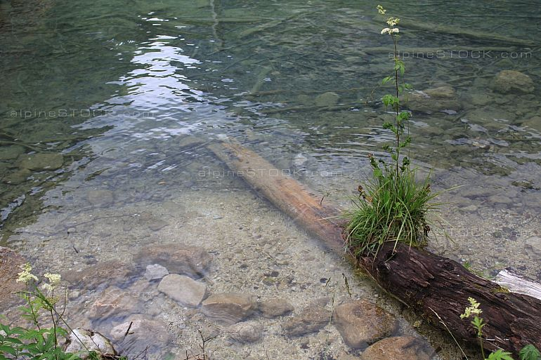 visible tree trunk under clear water