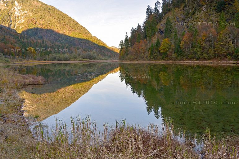 Autumn at lake Weitsee at nature reserve eastern Chiemgau alps
