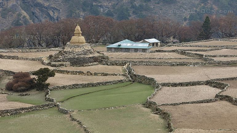 Terraced fields and old Stupa