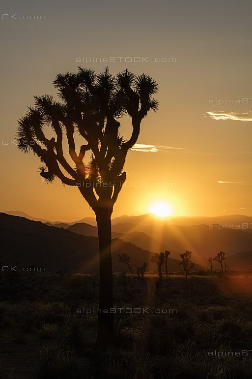 Quail Springs Joshua Tree National Park Sunset