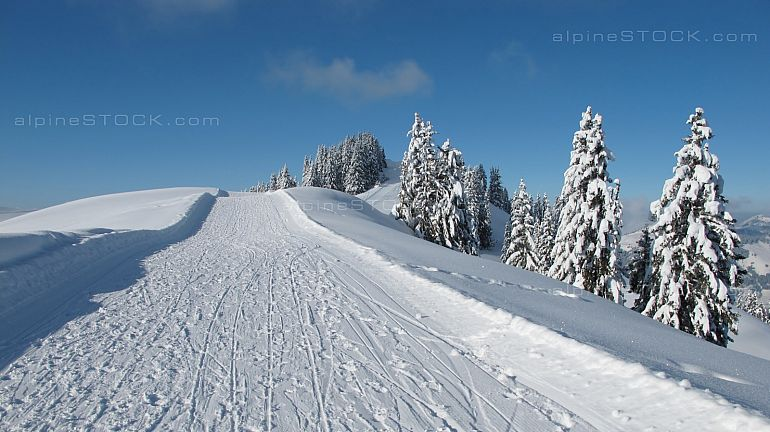 Ski slope and snow covered spruces