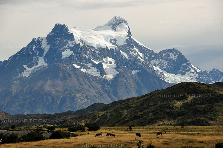 Horses in front of Cerro Paine Grande, Torres del Paine national park