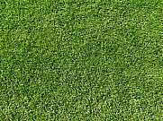 Golf ground green grass