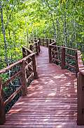 Red wooden bridge in green tropical forest