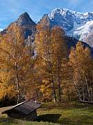 larch trees in autumn mountain courmayeur