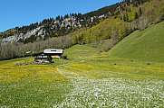 Alpine meadow with houses in Engelberg