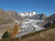 Aletsch Glacier from Aletschwald