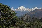 Dhaulagiri and red rhododendron