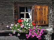 Blumenfenster Flower window alpine chalet