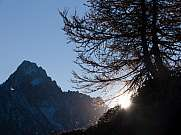 tree and mountain against the light argentiere