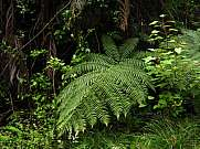Fern growing in New Zealand