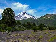 view of Lanin volcano with Araucaria trees