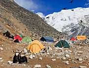 Island Peak base camp with tents and yaks