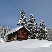 Little chalet and firs winter scene in Braunwald