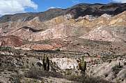 National park of Los Cardones