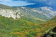 Forest Valley Provence Cote d Azur