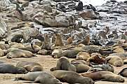 Seal Colony Cape Cross Namibia