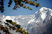 annapurna south abc viewpoint framed by branch