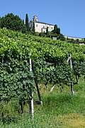 Vineyard at Porza near Lugano