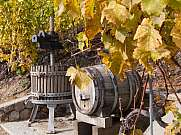 wine press and barrel in the vineyard