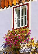 Closed Window with petunia decoration