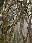 Detail of a rhododendron forest in Nepal during fog