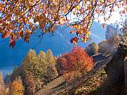 colorful mountain trees in autumn