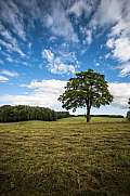 Tree in a meadow with clouds Kashubian district