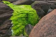 super green moss on red sandstone rocks St. Bees Head