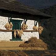 Drying corn and sleeping cat, beautiful scene in Ghandruk, Nepal