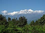 Annapurna Range And Fern