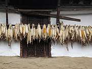 Corn drying under the roof of a farmhouse in Ghandruk
