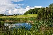 Pond with meadow and trees Kashubia district