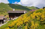 Hut and yellow flowers Grand-Bornand Chinaillon