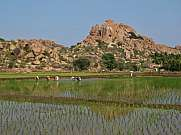 Granite mountain and rice field in Hampi, India