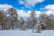 Snow in Troodos Mountains Cyprus