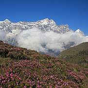 Meadow with pink wildflowers and snow capped mountain in the Himalayas